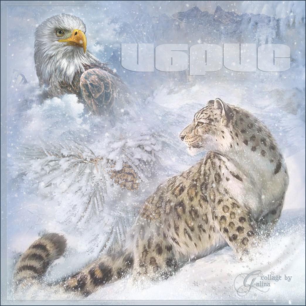 Ибрис - Снежный барс