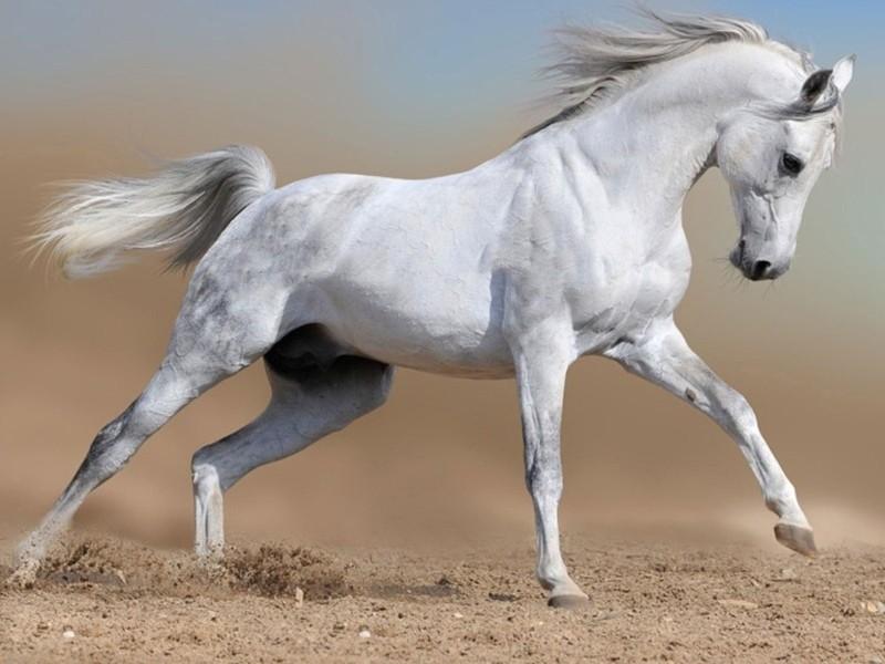 Красивый молодой конь