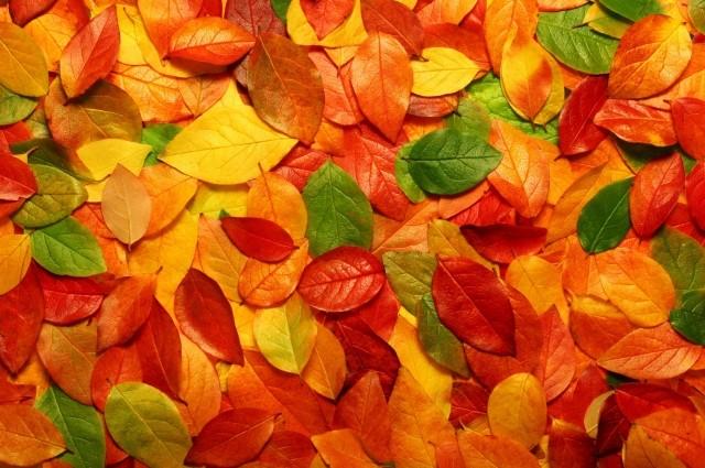wpapers ru osennie listya