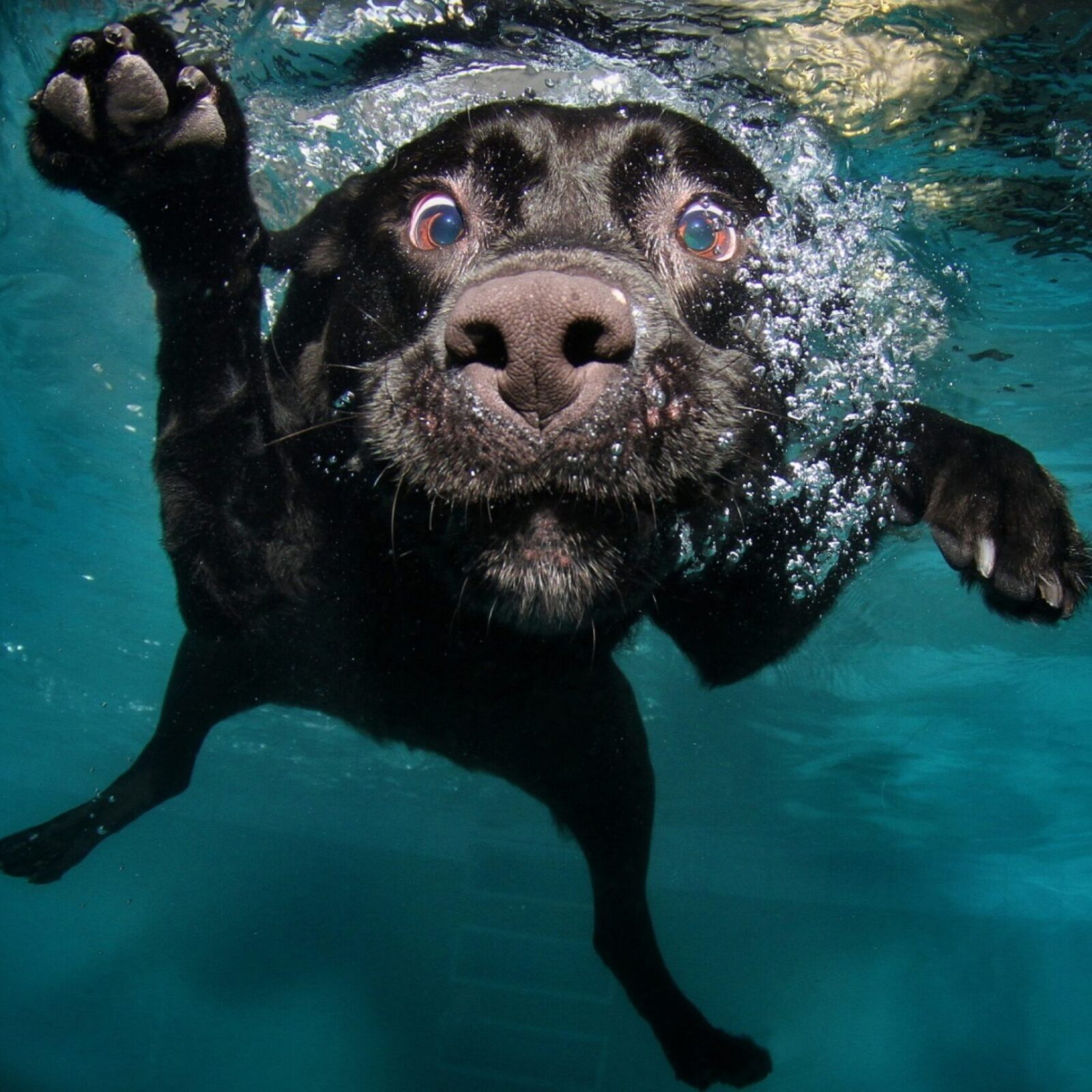 dog swimming 2880x19201 1
