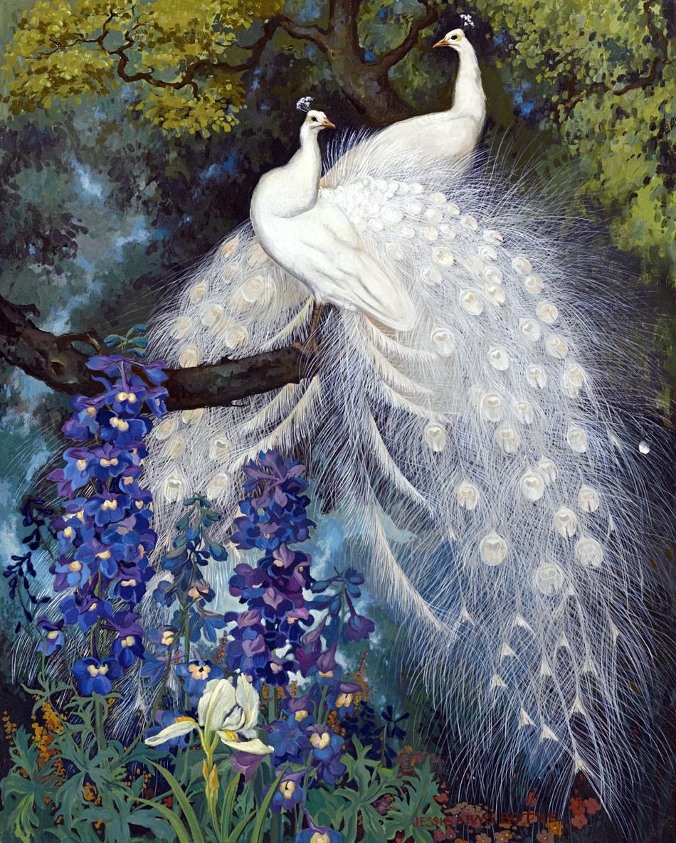 white peacocks and blue delphinium pavliny