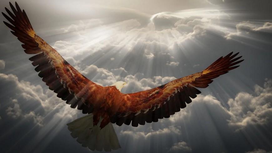 Мудрый орёл