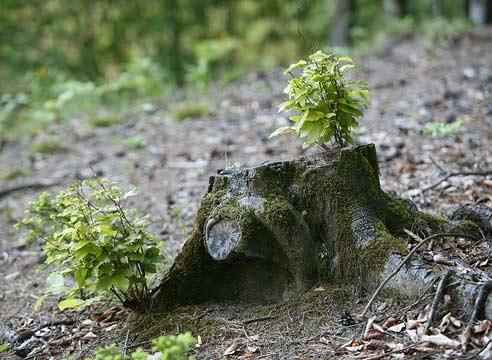 Весна возвратится (притча о мёртвом дереве)