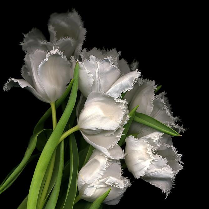 Фотограф Magda indigo и ее цветы...