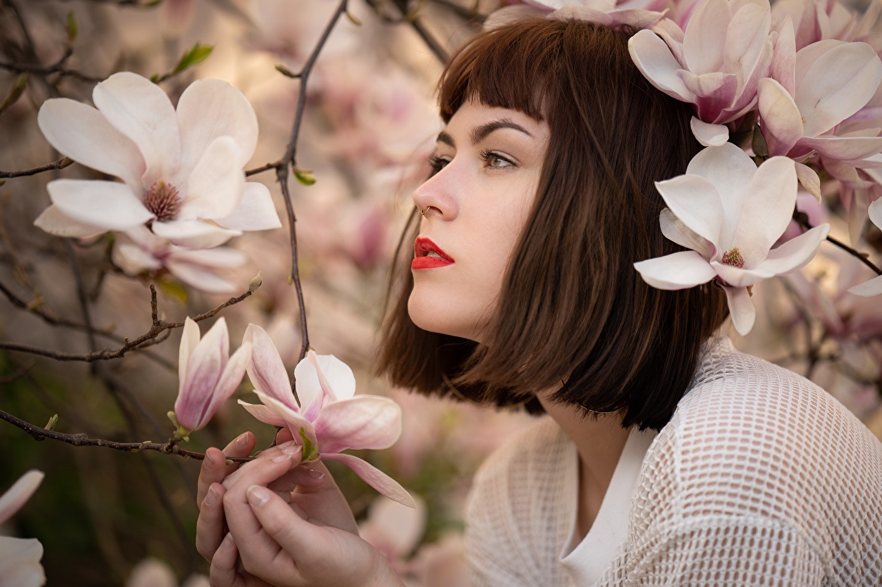 flowering trees magnolia katharina brown haired 591551 1280x853 1