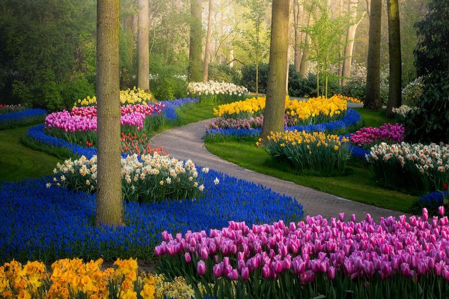 Фотограф запечатлел безлюдный парк Кёкенхоф, оказавшийся без посетителей впервые за 71 год