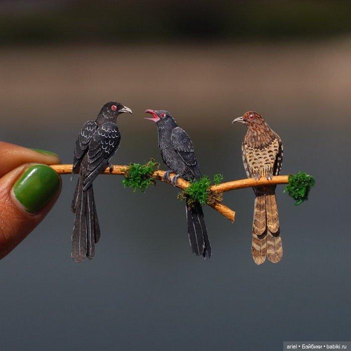 ptichki