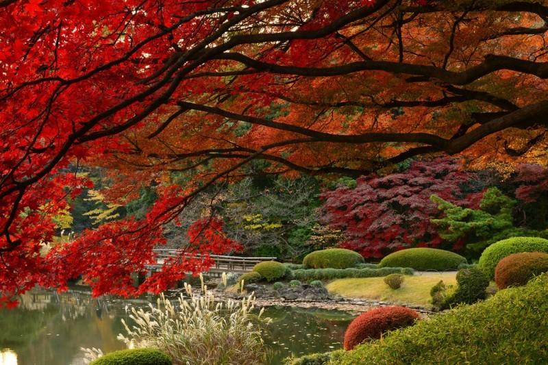 Осень — сезон момидзи в Японии.