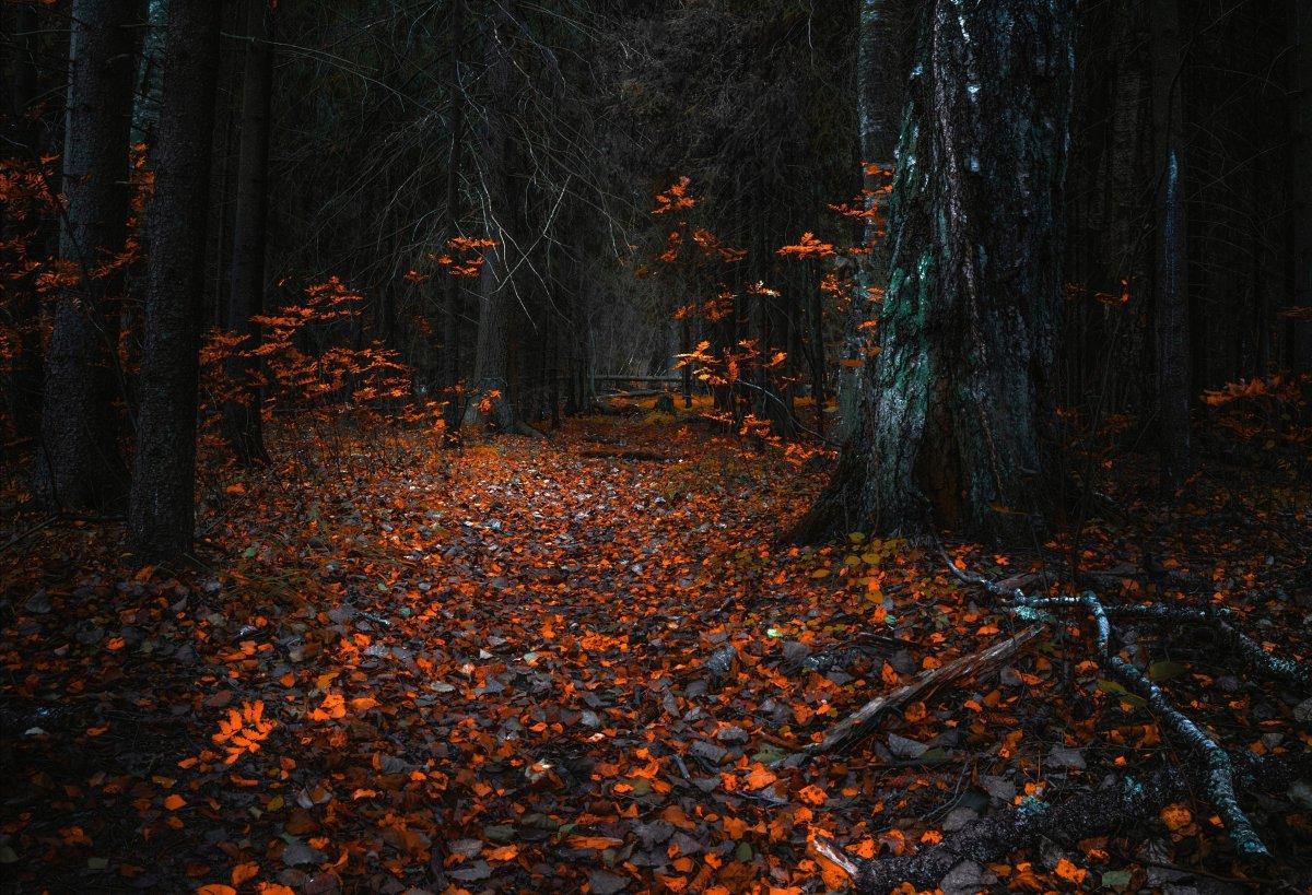 1623829535 21 oir mobi p strashno v lesu priroda krasivo foto 24 1