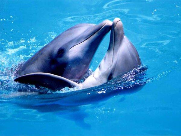 delfiny eto interesno poznavatelno kartinki 26936414291